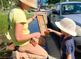 Beekeeper showing a young child honey from the beehive